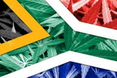 Cape Town High(?) Court Judgement Decriminalises Dagga